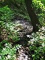 Виходи підгрунтових вод у балці Бандурці.jpg