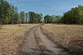Дорога в лес - panoramio (1).jpg