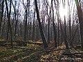 Еталонна діброва Вінницьке лісництво 11.jpg