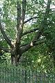 Кенсінгтонскія сады 16.JPG