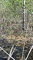 Моховатое болото образовалось в период кайнозойской эры.jpg