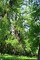 Наводницкий парк в Киеве. Фото 81.jpg