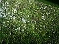Наймагутны дождж з градам - panoramio.jpg