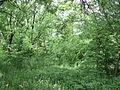 Парк шума Гази Баба во мај (14).JPG
