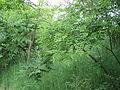 Парк шума Гази Баба во мај (175).JPG
