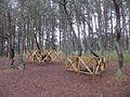 Танцующий лес 51.jpg
