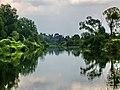 Тула. Берега во хмелю на Упе в д-о Якшино. 18-08-2011г. - panoramio.jpg