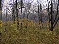 Украина, Киев - Голосеевский лес 145.jpg