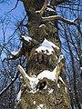 Украина, Киев - Голосеевский лес 25.jpg