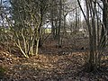 Урочище Круглая Гора. Ранняя весна. (Round Mountain tract. Early Spring) - panoramio.jpg