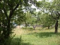 Яблоневый сад - panoramio (12).jpg