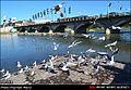 پل چشمه کیله تنکابن.jpg