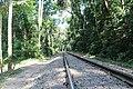 লাউয়াছড়া জাতীয় উদ্যান 09.jpg