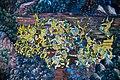 จิตรกรรมฝาผนังวัดพระแก้ว Wat Phra Kaew 0005574 by Trisorn Triboon D85 9676.jpg