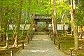京都 地蔵院 Kyoto Jizo In (139739795).jpeg