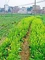 合山市河里乡 - panoramio.jpg