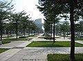 小叶榄仁-Terminalia Catappa Linn(中心书城广场) - panoramio.jpg