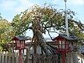 山王宮日吉神社03.jpg