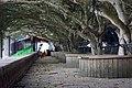 東港榕樹公園 Donggang Banyan Park - panoramio.jpg