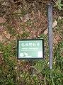 植物園中的植物及樹木花草(包括歷史遺跡)-32.jpg