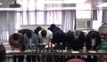 香港公民議政平台籌備委員會記者會 apologize 20201231.png