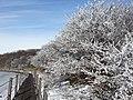 사라오름 겨울2.jpg