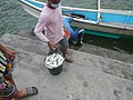 0016Hagonoy Fish Port River Bancas Birds 30.jpg