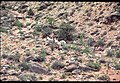 009 Grand Canyon Aerial of Burro Damage 1975 (4951577697).jpg