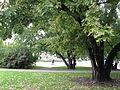 030 Náměstí Míru, park.JPG