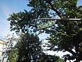03105jfEspana Boulevard Landmarks Barangays Lacson Sampaloc Manilafvf 17.jpg