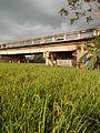 03910jfPaddy fields village Baliuag Bulacan Candaba Pampanga Bridge Roadfvf 16.JPG