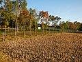 0581jfLandscapes Mabalas Diliman Salapungan Paddy fields San Rafael Bulacan Roadsfvf 03.JPG
