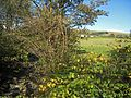 111007 River Garnock and Blackbarn farm.jpg