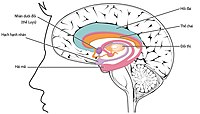 1511 The Limbic Lobe-vi.jpg