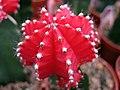 1836 - Altoona - Flower.jpg