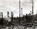 1937. Interstate Logging Company spar tree. Tillamook Burn, OR. (34861302311).jpg