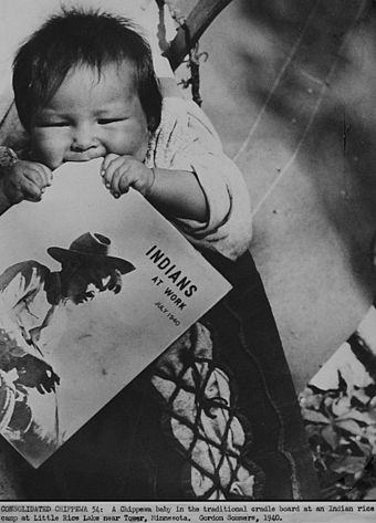 Ojibwe baby waits on a cradleboard while parents tend wild rice crops (Minnesota, 1940). 1940 govt photo minnesota farming scene chippewa baby teething on magazine indians at work.jpg