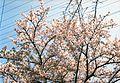 1 Chome Terauchi, Toyonaka-shi, Ōsaka-fu 561-0872, Japan - panoramio.jpg