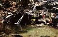 20020800 Paradise pond Samothrace island Thrace Greece.jpg