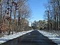 2007 12 06 - PWRC - Loblolly Pine Dr 5.JPG