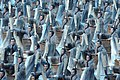 2008 Summer Olympics - Opening Ceremony - Beijing, China 同一个世界 同一个梦想 - U.S. Army World Class Athlete Program - FMWRC (4928550914).jpg