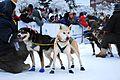 2010 Yukon Quest (4340854571).jpg