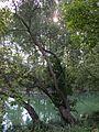 20120909Rheinauen Altlussheim6.jpg