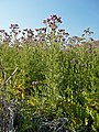 2015.08.17 18.00.17 DSCN2855 - Flickr - andrey zharkikh.jpg
