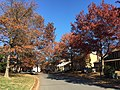 2016-11-18 11 46 26 View north along Dairy Lou Drive at White Barn Lane in the Franklin Farm section of Oak Hill, Fairfax County, Virginia during autumn.jpg