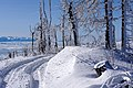 20200208 Pasmo Lubania w Gorcach, szlak na Lubań 1237 0698.jpg