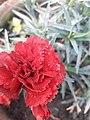 2flower 0181201 091731.jpg