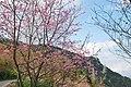 311, Taiwan, 新竹縣五峰鄉大隘村 - panoramio (29).jpg