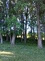 35-211-5001 Бандурівські ставки Лютинська 8.jpg