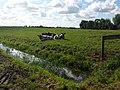 3646 Waverveen, Netherlands - panoramio (49).jpg